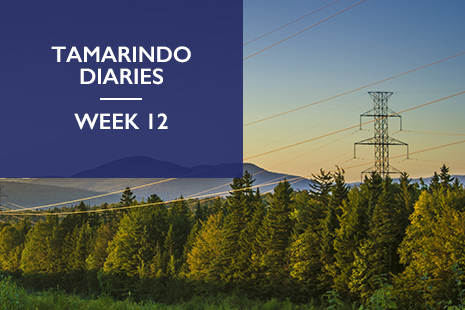 Tamarindo Diaries week 12 - what is the future of energy storage?
