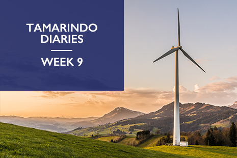Tamarindo Diaries Week 9 - Content Marketing